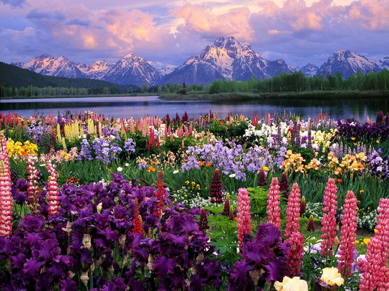 Dana Fuchs Blog April Showers Bring May Flowers Upcoming