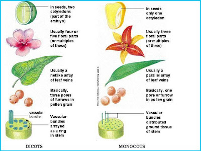 Baby Plant Project Family Relationships
