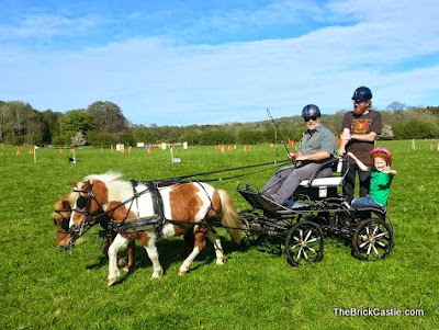 Pony and carriage driving with Shetlands in the Lake District
