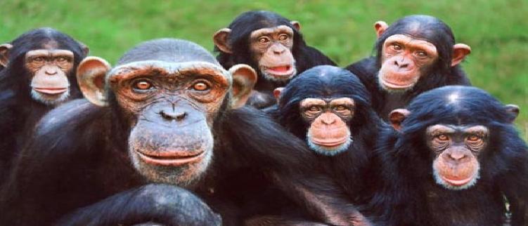 <center> <b> La Vida de los Primates </b> </center>