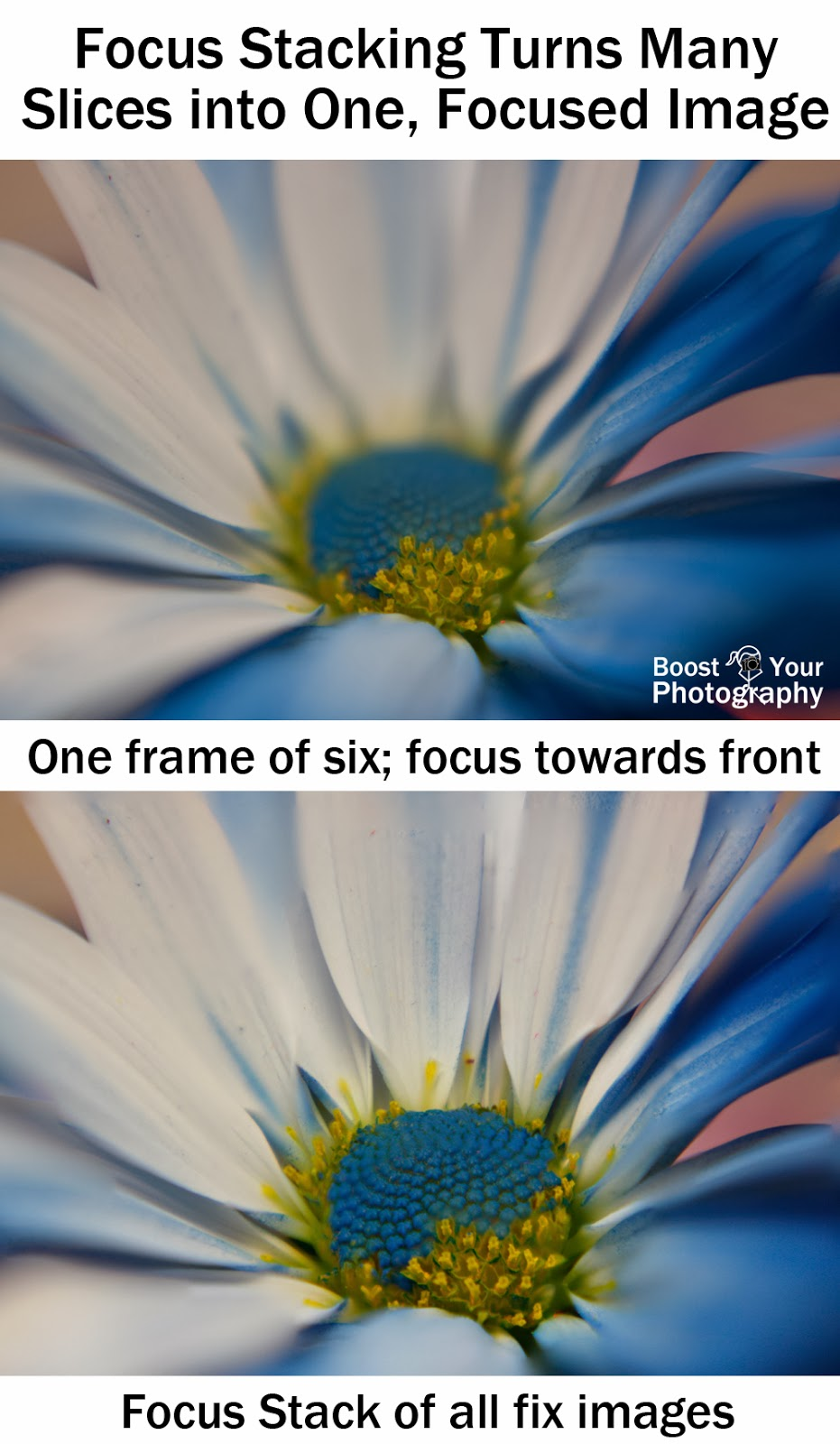 Focus Stacking Increases Depth of Field in Macro | Boost Your Photography