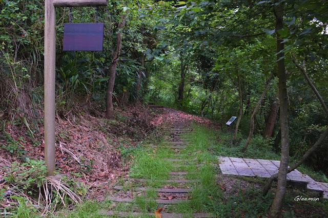 雞南山散步,掉了滿地的蓮霧是眉眼蝶的美食之一。