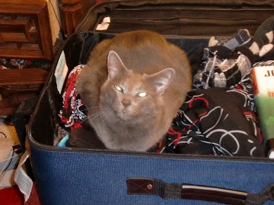 """Charlie Wants to Go, Too"" - Cat sits in suitcase, ready to be packed. Photo © Laura Sheana Taylor."