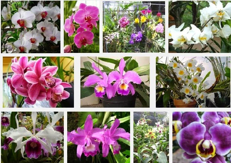 Caring for Orchids in Pot Plants