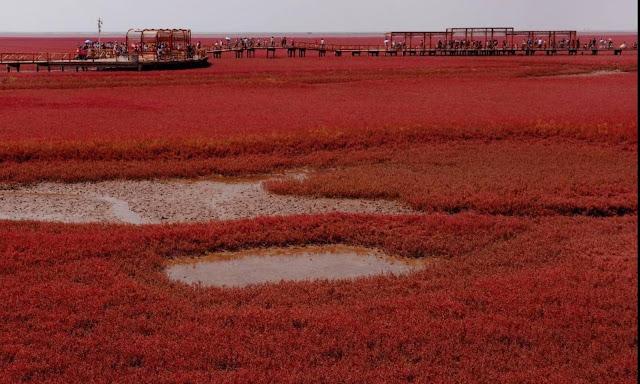 عجائب الدنيا وهل تعلم - الشاطئ الأحمر في الصين