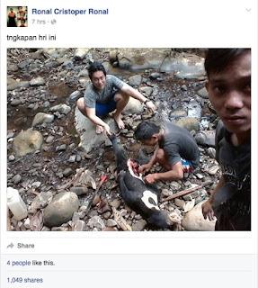 Pembantai Beruang Madu ditangkap Polisi