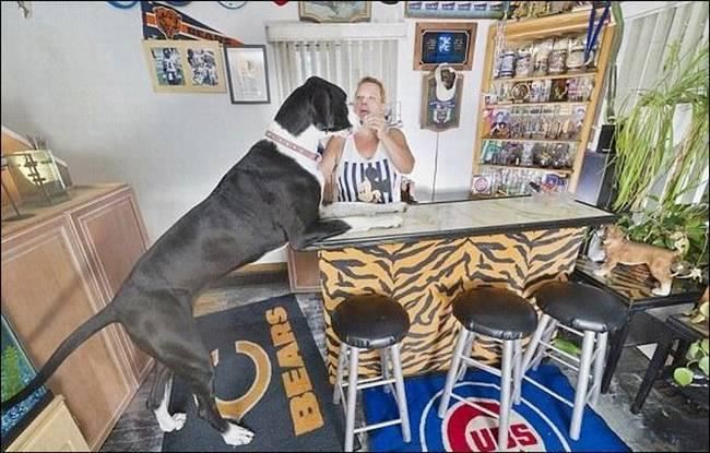http://1.bp.blogspot.com/-EwD3fH2gL-k/Tocc2Y6S_BI/AAAAAAAAjaU/PyaJ-xqNj_k/s1600/Nova+Tallest+Dog+-+003.jpg