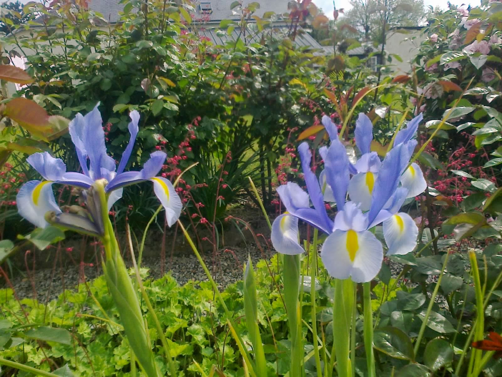 Fleuriste isabelle feuvrier l 39 irs hildegarde for Jardin hildegarde