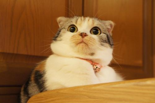 http://1.bp.blogspot.com/-EwKfB0BF0Jw/TyVqhbN3opI/AAAAAAAAAQM/jJiaRewyofs/s1600/cute+suprised+cat.jpg