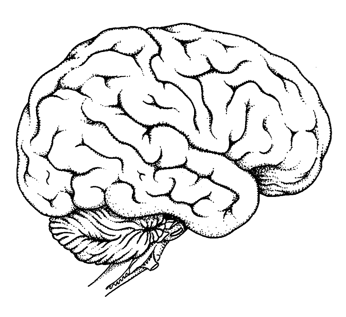 Free And The Brain Coloring Pages