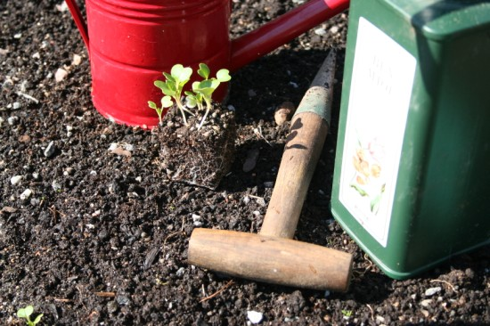 Planteringspinne, benmjöl och späda plantor