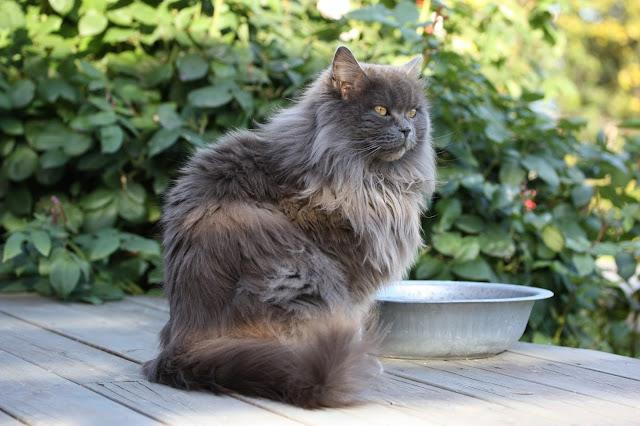 VÅrli : med katt i hagen