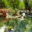 'El somni del llac (Guillem Sostres Miranda)'