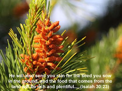 Isaiah 30:23 Bible Quotes