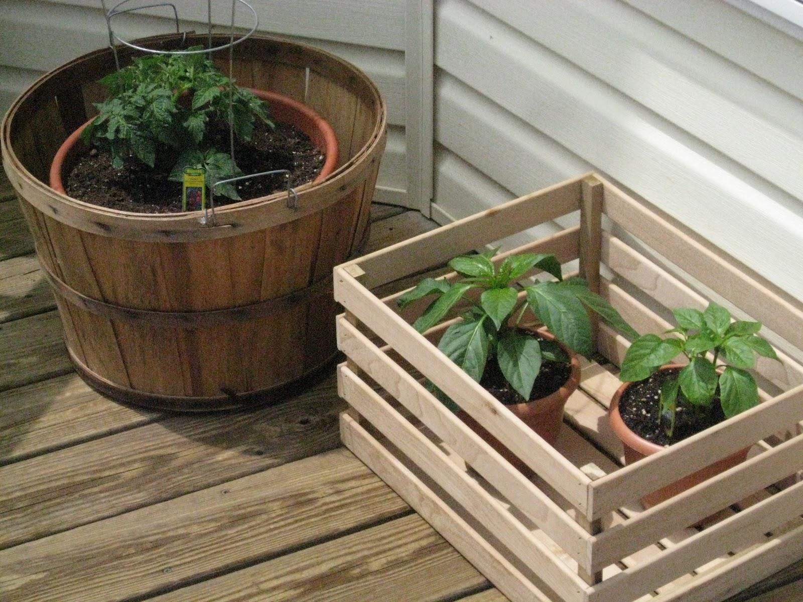 Bonz Blogz: Garden Progress- Day 16