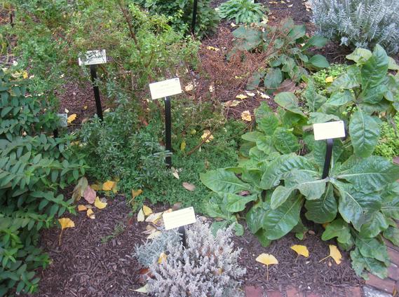 Miraculous Plant