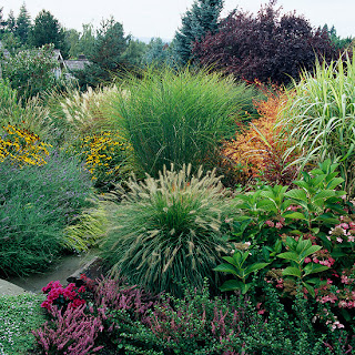 landscaping grasses and fescues