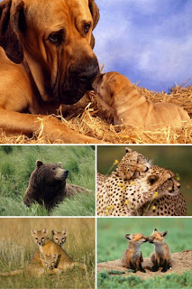 Животные обои картинки