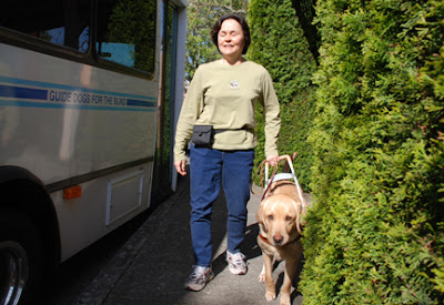 Donna and guide dog Kyle walk down the street next to a GDB bus