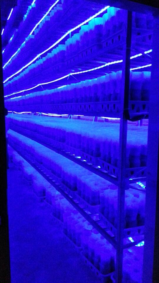Lights For Mushroom Grow Rooms