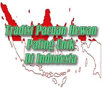 Tradisi Pacuan Hewan Paling Unik Di Indonesia
