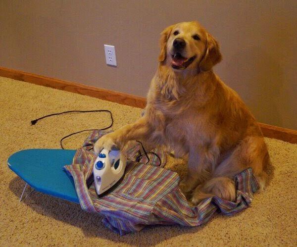 funny dogs, dog photos