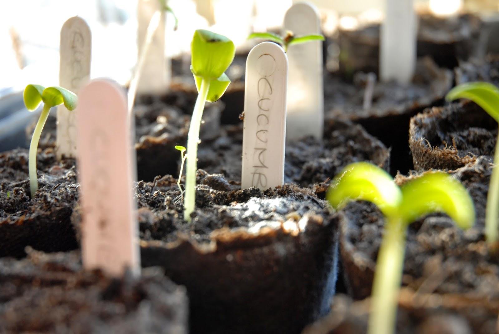 Sharing seeds promotes biodiversity