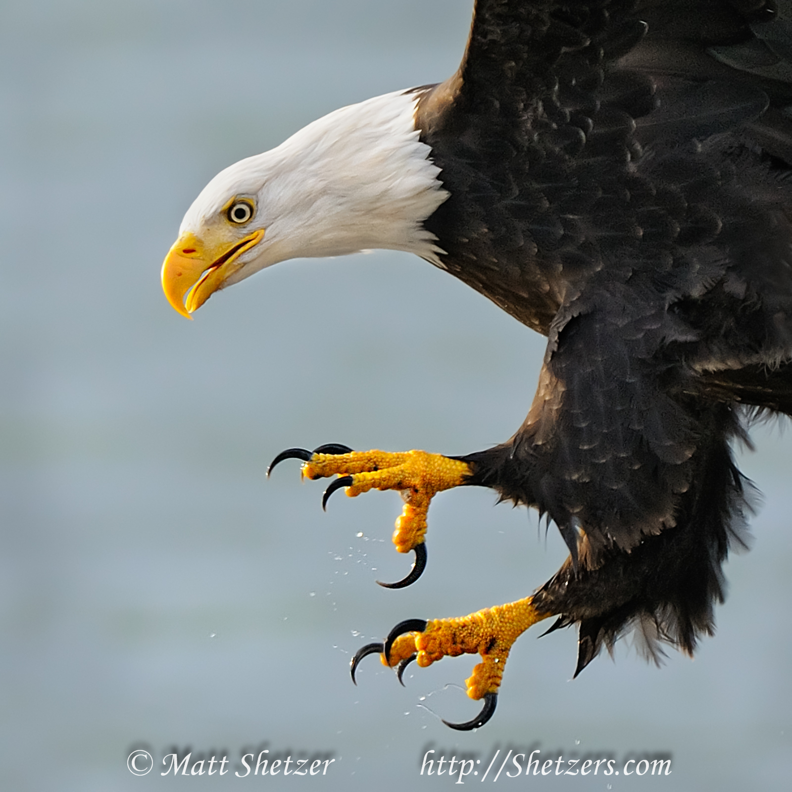 Eagle Information: Eagle Documents and Pictures