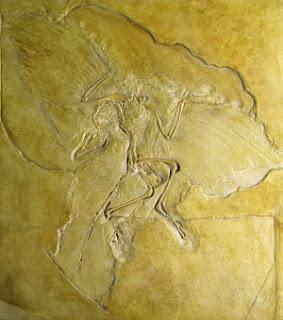 fósil de arqueopterix