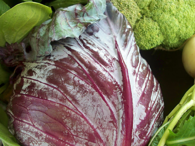 Farm fresh red cabbage