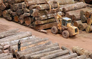 Brazil Amazon rainforest deforestation