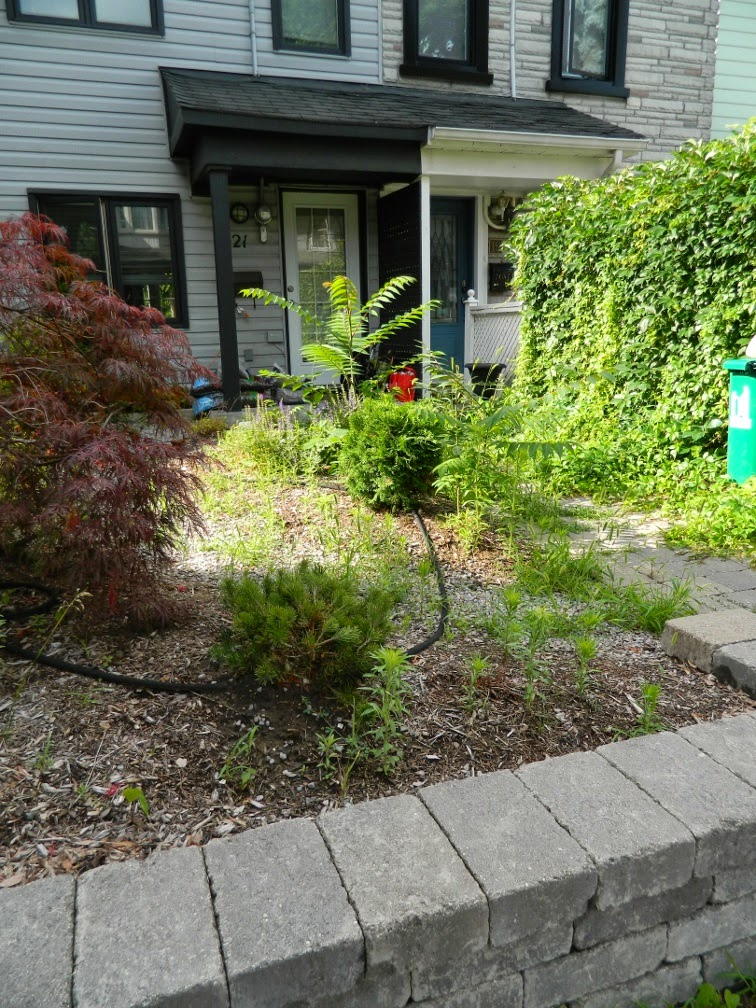 Paul Jung Gardening Services Toronto Leslieville garden cleanup front garden before