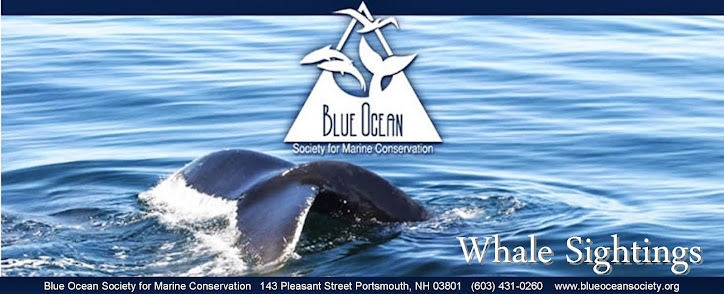Blue Ocean Society's Whale Sightings