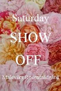 Saturday show of