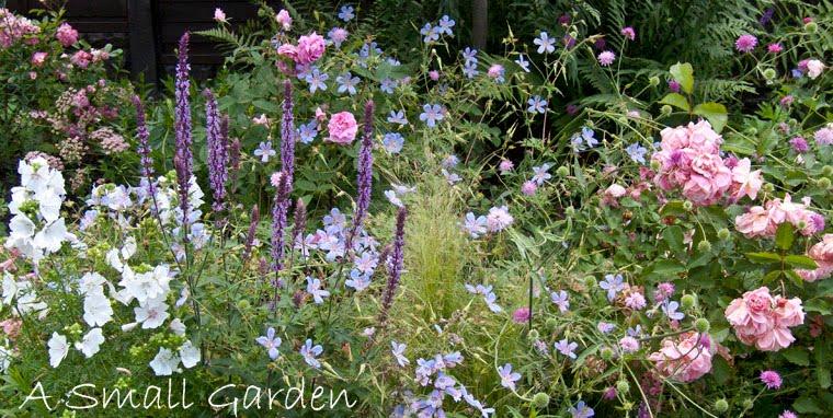 A Small Garden