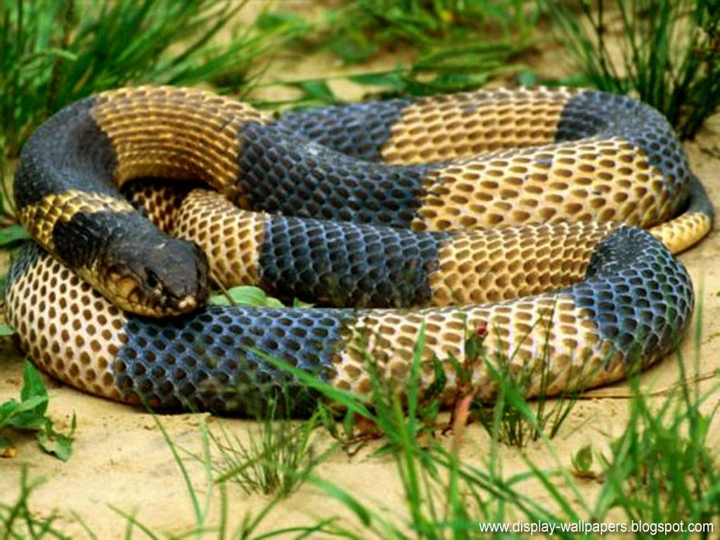 snake wallpaper horror viewing gallery