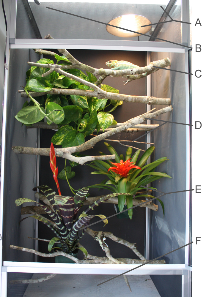 How To Set Up A Proper Chameleon Enclosure Much Ado About Chameleons