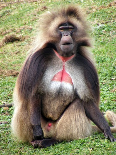 science reason and logic rule funny and cute primates