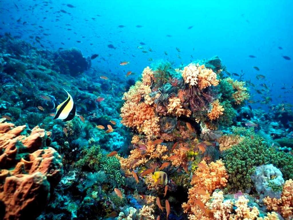 Arrecifes de Coral, Islas de la Bahía