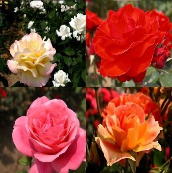 gambar bunga-bunga yang indah