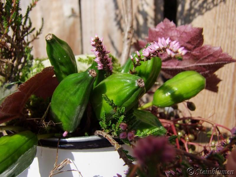 Irisfrüchte