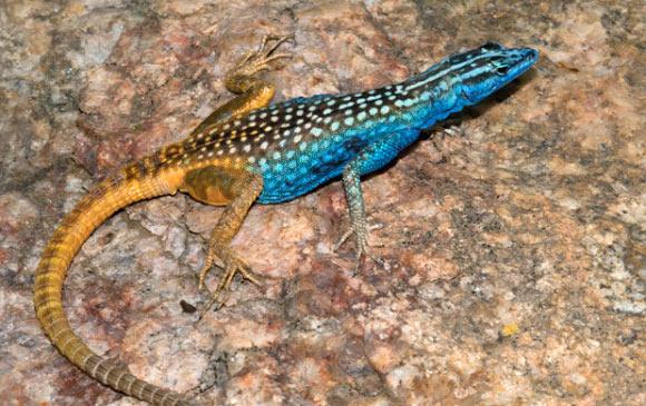 ... universitetet maquari i australien har i sydafrika hittat en ny art