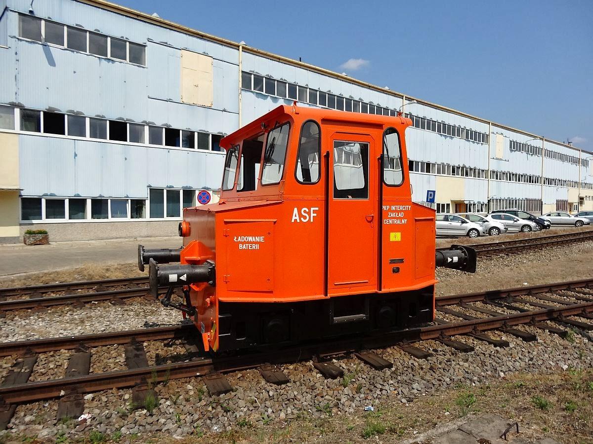 ASF z Olszynki ... drugi egzemplarz