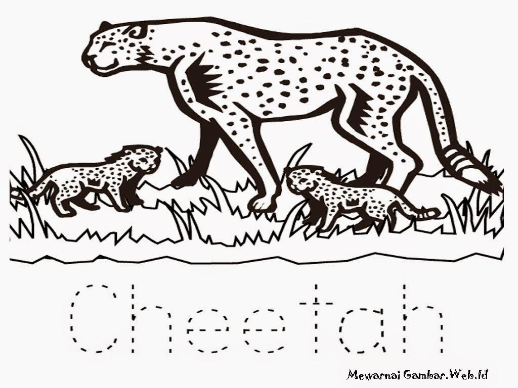 Halaman Mewarnai Gambar Cheetah