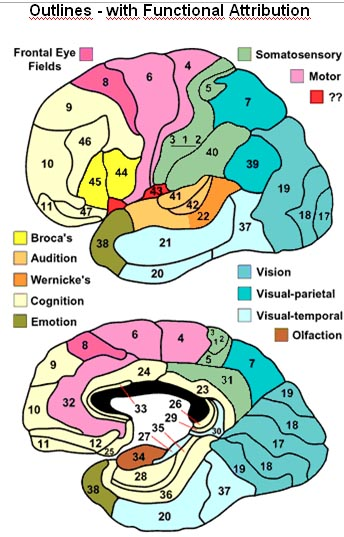 Brain Function Map2
