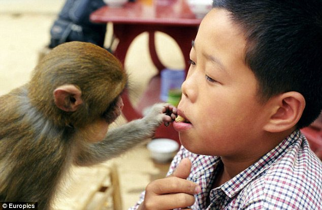 heeky monkey: One of the animals tries to tease a nut from a child's mouth