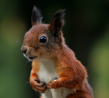 """Squirrel looking surpised """"Don't mind the colours"""" by Tomi Tapio K on flickr (CC-by-2.0) Taken on Sept. 23, 2007"""
