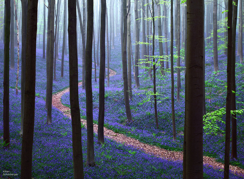 forest wildflower path