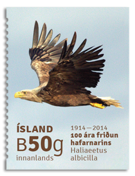 Iceland: The white-tailed eagle