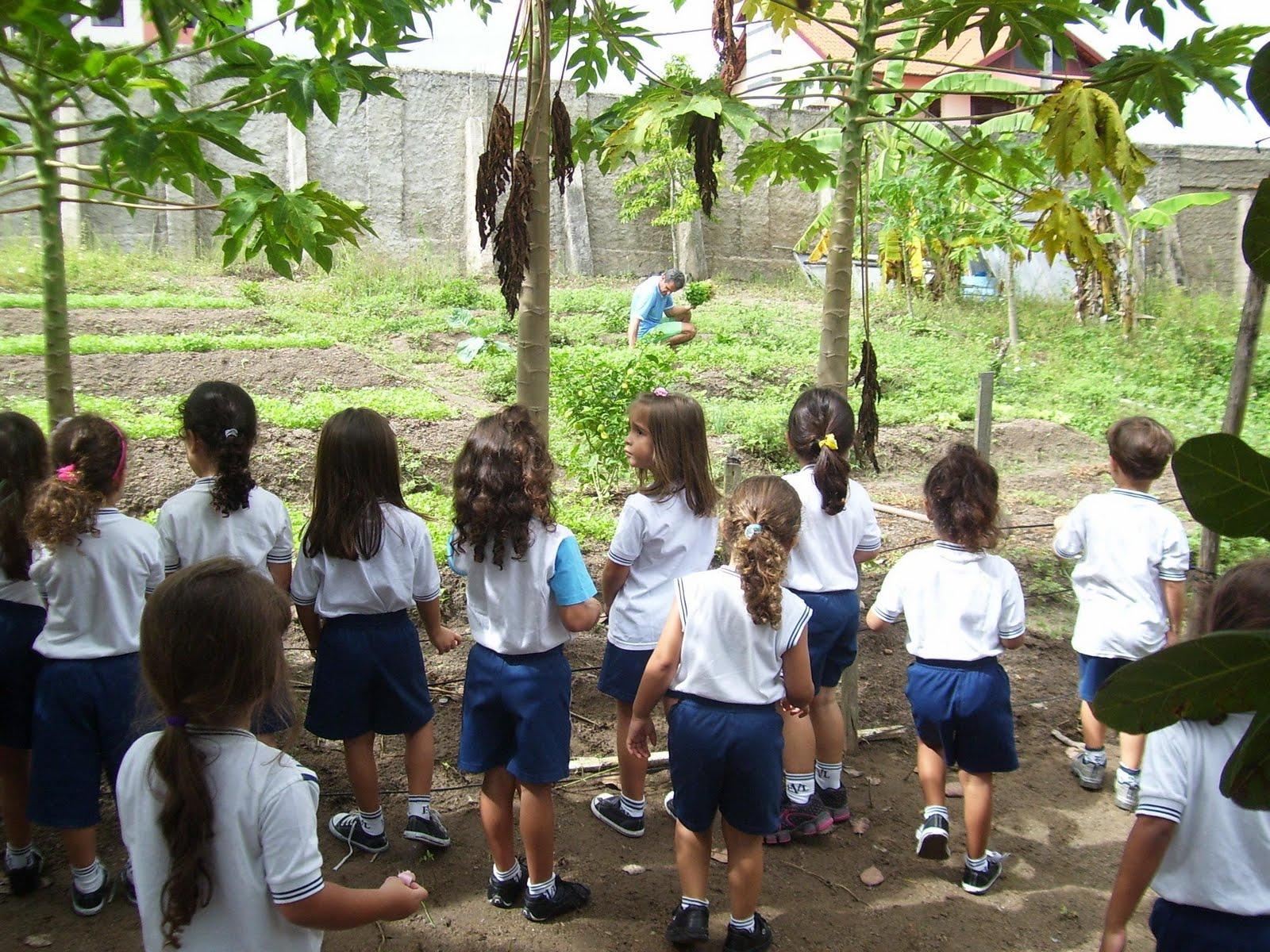 horta jardim e pomar:no jardim flores e plantas ornamentais.